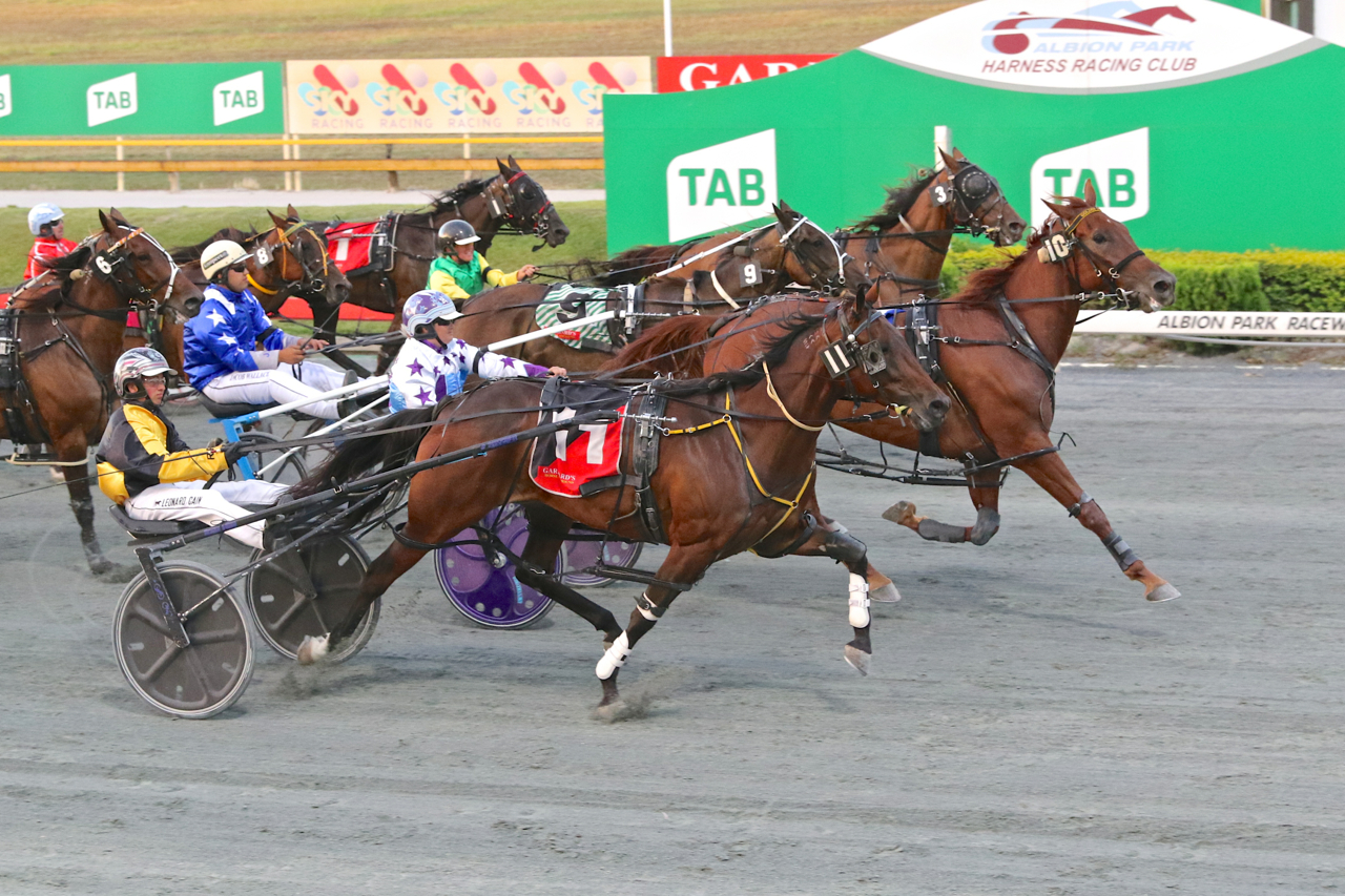 harness racing meet at albion park