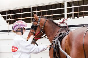 Form Guide Harness Driver with Horse at The Creek Albion Park